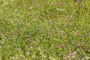 Terrain 0 m² Dompierre-sur-Mer   pièces
