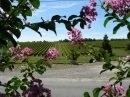 Propriété <b>16 ha 76 a </b> Gironde