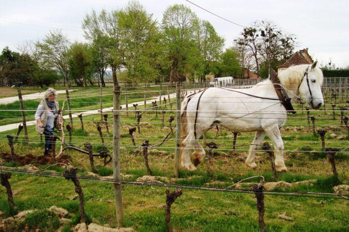 Propriété <b>4 ha 22 a </b> Dordogne (24)
