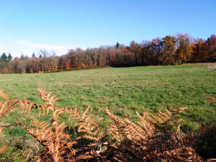 Propriété 10 ha 74 a  Dordogne (24)
