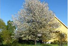 limite séparative des arbres et la haie de votre voisin