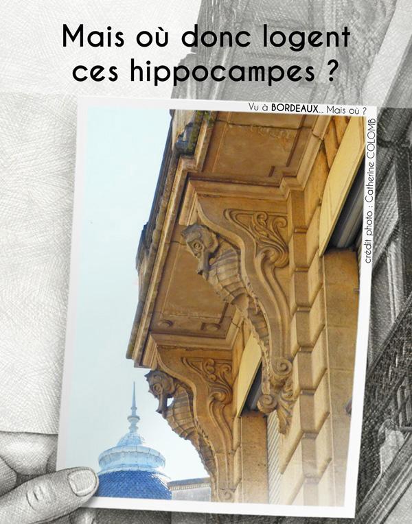 Mais où donc logent ces hippocampes ?
