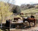 Propriété <b>60 ha </b> Aveyron